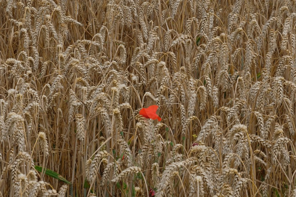 Field where one flower stands out